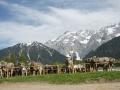 braunviehzuchtausstellung-100-jahre-vzv-2012_003