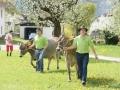braunviehzuchtausstellung-100-jahre-vzv-2012_013