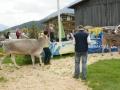 braunviehzuchtausstellung-100-jahre-vzv-2012_037