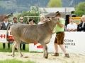 braunviehzuchtausstellung-100-jahre-vzv-2012_038