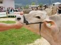braunviehzuchtausstellung-100-jahre-vzv-2012_044