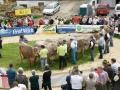 braunviehzuchtausstellung-100-jahre-vzv-2012_098