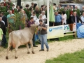 braunviehzuchtausstellung-100-jahre-vzv-2012_106