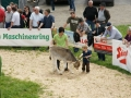 braunviehzuchtausstellung-100-jahre-vzv-2012_111