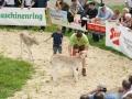 braunviehzuchtausstellung-100-jahre-vzv-2012_112