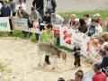 braunviehzuchtausstellung-100-jahre-vzv-2012_114
