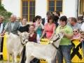 braunviehzuchtausstellung-100-jahre-vzv-2012_121