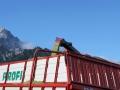 silo-maisernte-2012_055
