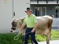 braunviehzuchtausstellung-100-jahre-vzv-2012_014