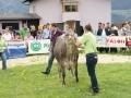 braunviehzuchtausstellung-100-jahre-vzv-2012_042