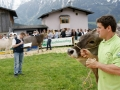 braunviehzuchtausstellung-100-jahre-vzv-2012_051