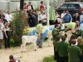 braunviehzuchtausstellung-100-jahre-vzv-2012_110